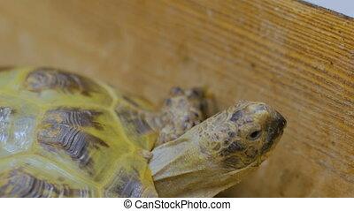 Turtle slowly crawl forward at zoo