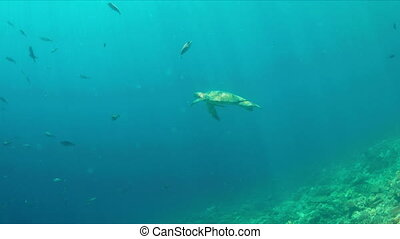 Turtle swims in blue water. Light reflections, sunrays