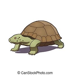 Turtle - This is a vector illustration of turtle