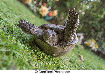 Turtle turn upside down