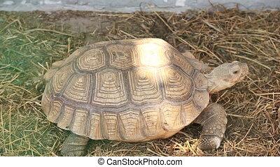 Turtle walks on aviary - Turtle walks the aviary at the zoo