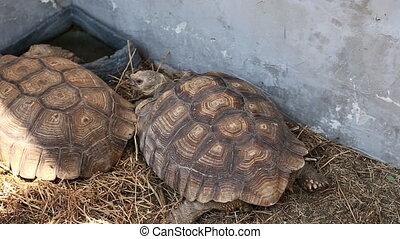 Turtle walks on aviary - Turtle walks the aviary