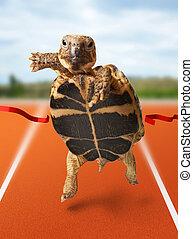 turtle, wenig, appretur, läufer, gewinnt, überfahrt, linie