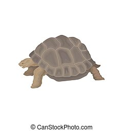 Turtle wild african animal vector Illustration on a white background