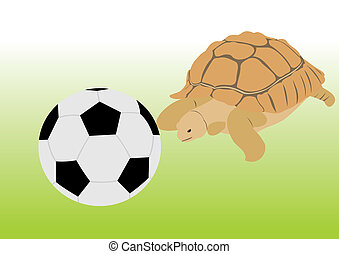 Turtle with a ball