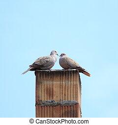 turtledoves on chimney