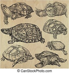 Animals around the World - TURTLES and Tortoises. Collection of an hand drawn vector illustrations. Freehand sketches. Line art. Each drawing comprise of a few layers of outlines. Background is isolated.