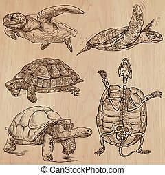 Turtles - An hand drawn vector pack - TURTLES (pack no.1) -...
