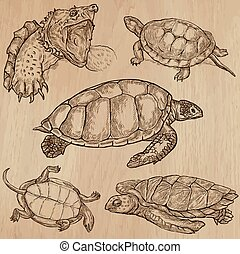 Turtles - An hand drawn vector pack - TURTLES (pack no.2) -...
