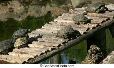 Turtles Basking