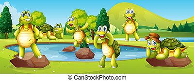 Turtles in pond scene