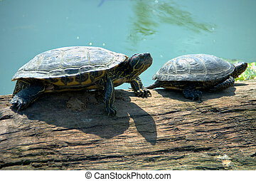 turtles on a log near the water