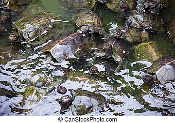 Turtles on the heap in natural water environment