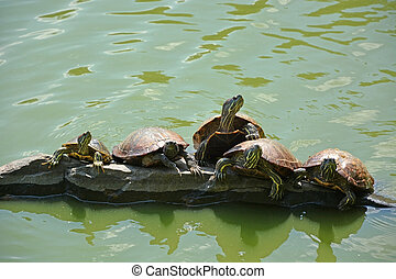 Turtles on the lake