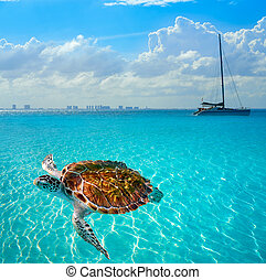 Turtles photomount in Caribbean Isla Mujeres