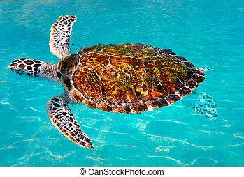 Turtles photomount in Caribbean water