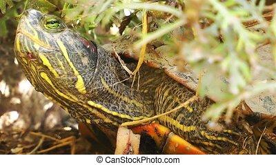 Turtles Reptile in Wild Life Nature