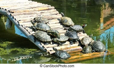 Turtles Reptile in Wild Life Nature