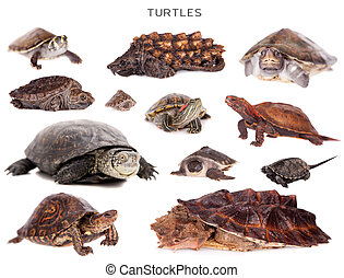 Turtles set on white