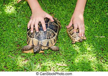 turtles - brown turtles reptile animal image