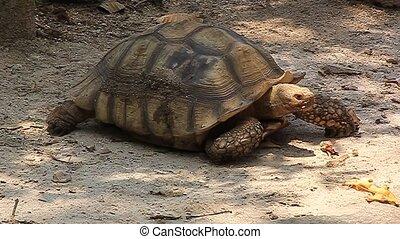 Turtles, wildlife