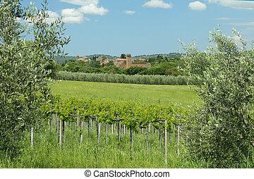 tuscan, ぶどう園, 緑の風景