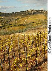 tuscan, ぶどう園, 風景