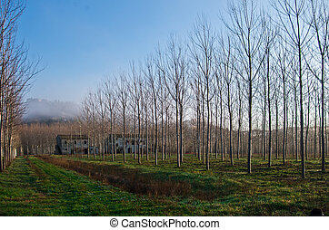tuscan, 시골, 와, 농장, 와..., 은