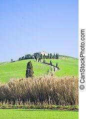 tuscan, 시골, 와, 농장, 와..., 은, 의, 나무