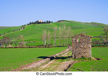 tuscan, 시골, 와, 농장, 와..., 은, 의, 나무, 와, 폐허