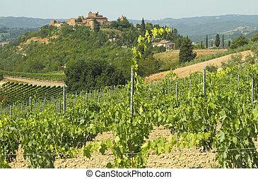 tuscan, 포도 동산