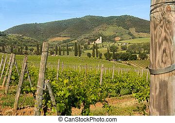 Tuscan abbey and vineyards - Vineyards surrounding San ...