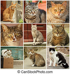 tuscan, collage, katter