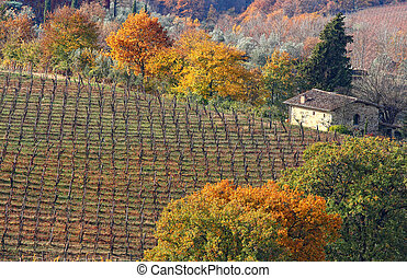 Tuscan cottage - A beautiful cottage with vineyard in...