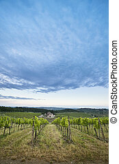 tuscan hills - landscape of the Tuscan hills and vineyards...