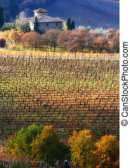 Tuscan landscape - A beautiful cottage with vineyard in...