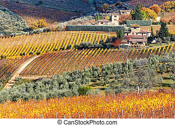Tuscan - A beautiful cottage with vineyard in Tuscany...