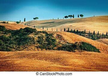 tuscan, verão, paisagem, tempo