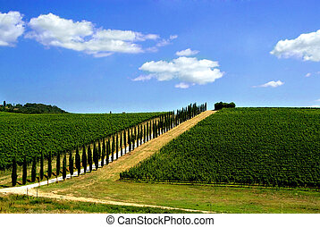 Tuscan vineyard 2