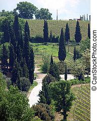 tuscan, weinberge, zypressen, landschaftsbild