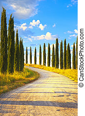 tuscany, 絲柏, 樹, 白色, 路, 鄉村的地形, italy, 歐洲