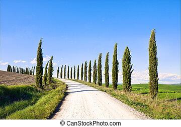 tuscany, 絲柏, 樹, 白色, 路, 風景, italy, europe.