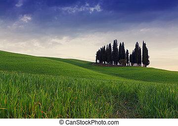 Tuscany, cipreste, árvores, pôr do sol,  springtime, paisagem, típico
