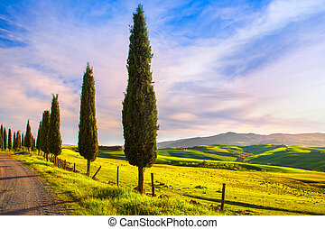Tuscany, cypress tree group and rural road. Volterra, Pisa Italy.