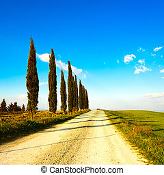 Tuscany, cypress tree group row and white rural road on sunset. Siena, Orcia Valley, Italy, Europe.