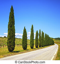 Tuscany, cypress trees, vineyard and road, rural landscape, Italy, Europe