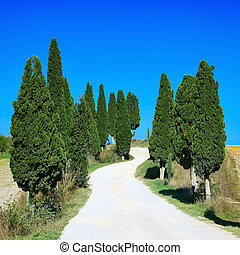 Cypress Trees rows and a white curved road rural landscape in Crete Senesi land near Siena, Tuscany, Italy, Europe.