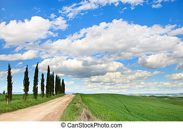 Cypress Trees row, a traditional white road, green field and blue cloudy sky. Rural landscape in Crete Senesi land near Siena, Tuscany, Italy, Europe.