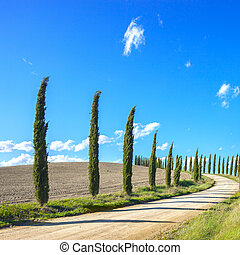 Tuscany, Cypress Trees white road landscape, Italy, Europe.
