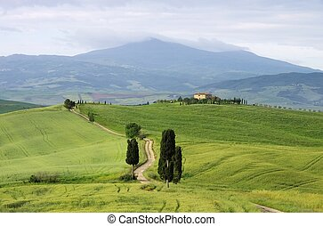 Tuscany cypress trees with track